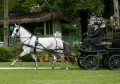 Canaletto_Interagro_Dressage-4