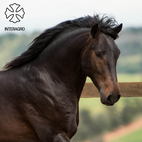 Hospedeiro Interagro/TUPA
