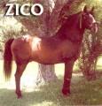 Zico_BF.jpg