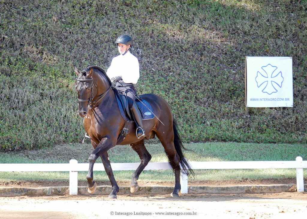 Zíngaro Interagro & Edmar Brito, 1st place Mall Tour/PSG at the 2nd phase of 2019 Interagro Dressage Ranking/Interagro Lusitanos