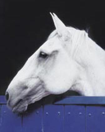 visqueiro2005