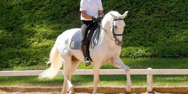 Horses in the South – Generations of Interagro Talent Showcased at Brazilian Working Equitation Championships