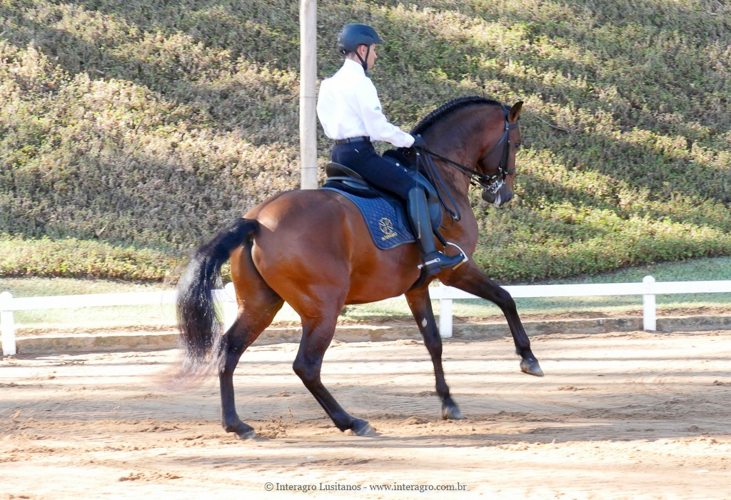 Edmar Brito & Empreiteiro Interagro, 2nd place Small Tour/PSG at the 2nd phase of 2019 Interagro Dressage Ranking/Interagro Lusitanos