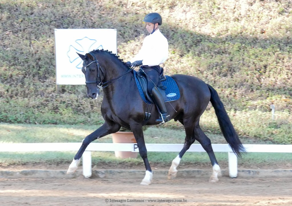 Edmar Brito & Fellini Interagro, 3rd place Small Tour/PSG at the 2nd phase of 2019 Interagro Dressage Ranking/Interagro Lusitanos
