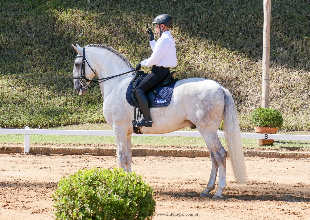 Hanibal Interagro & Edmar Brito, 1st place Fourth Level at the 2nd phase of 2019 Interagro Dressage Ranking/Interagro Lusitanos