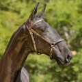 Numídia Interagro - Lusitano filly for sale at 17th Interagro Yearlings Auction/TUPA
