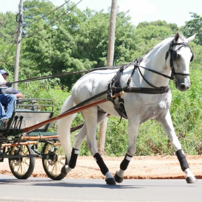 Homero Interagro driven by its owner Mr. Flavio D´Angieri Filho