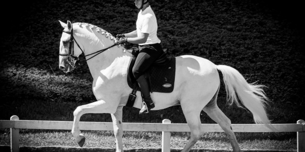 Interagro Dressage Ranking – results of 1st phase