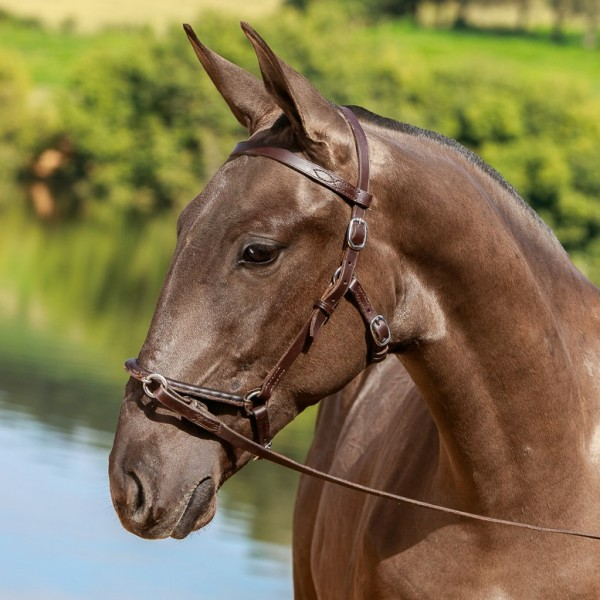 Navegador Interagro - Lusitano foal for sale at 17th Interagro Yearlings Auction on September 2nd, 2017/TUPA
