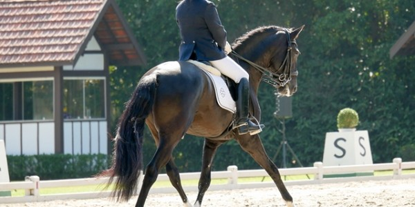 Young horses: the 7-year-old challenge