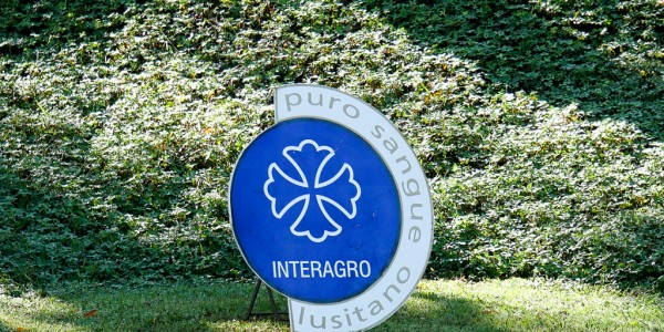 Interagro Dressage Ranking – results of 2nd phase