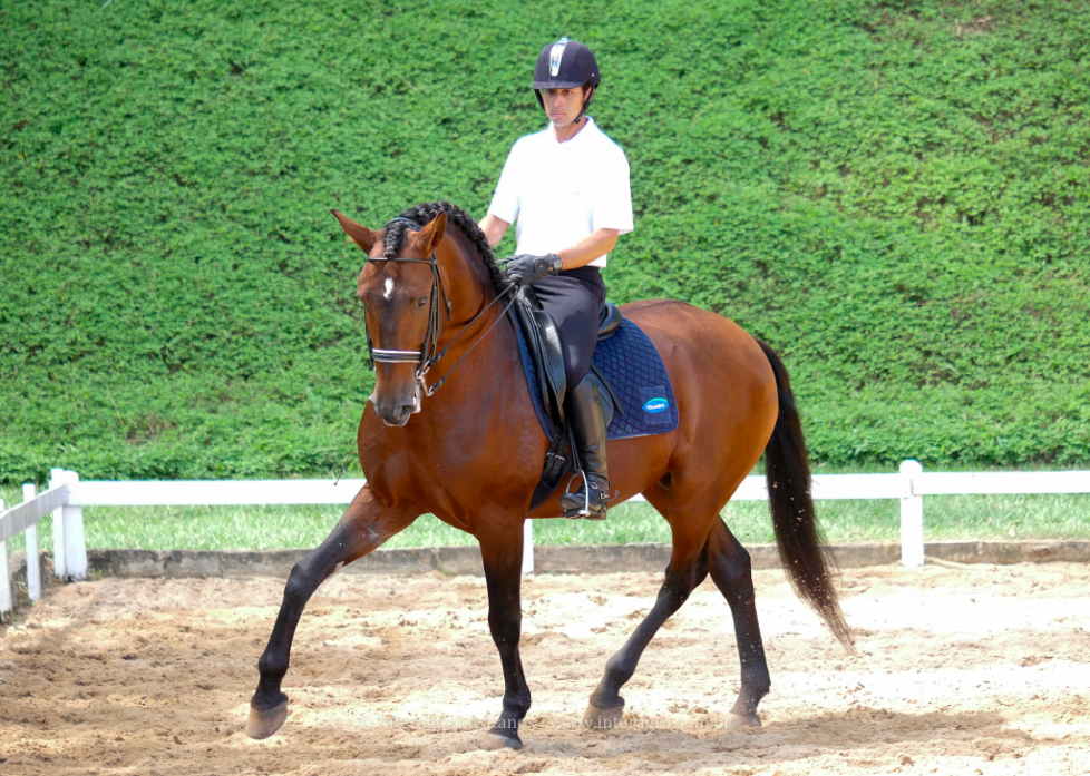 Empreiteiro Interagro (Photo by Interagro Lusitanos)