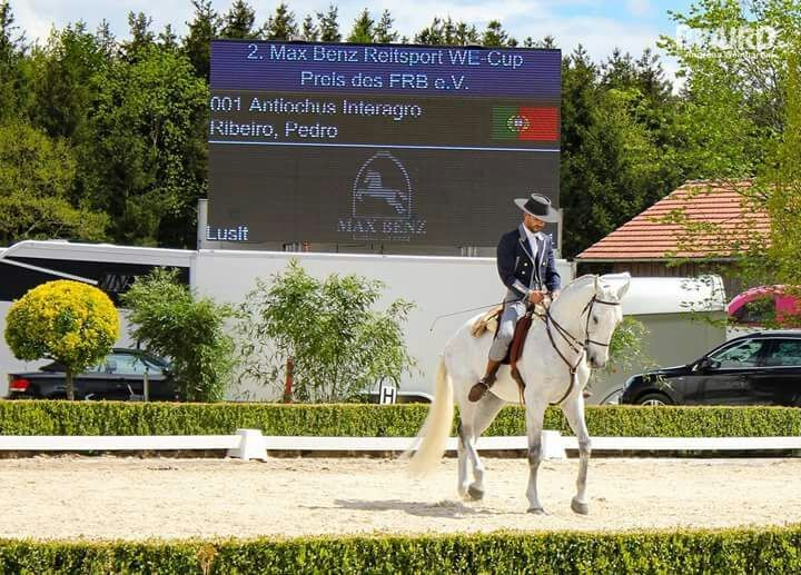 Antiochus Interagro competing in Germany in August 2017 (Photo courtesy of Lisa Cosgrove)