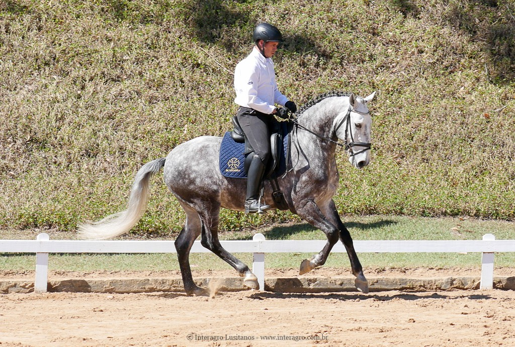 Laertes Interagro & Alexandre Souza, 2nd place Training Level at the 2nd phase of 2019 Interagro Dressage Ranking/Interagro Lusitanos