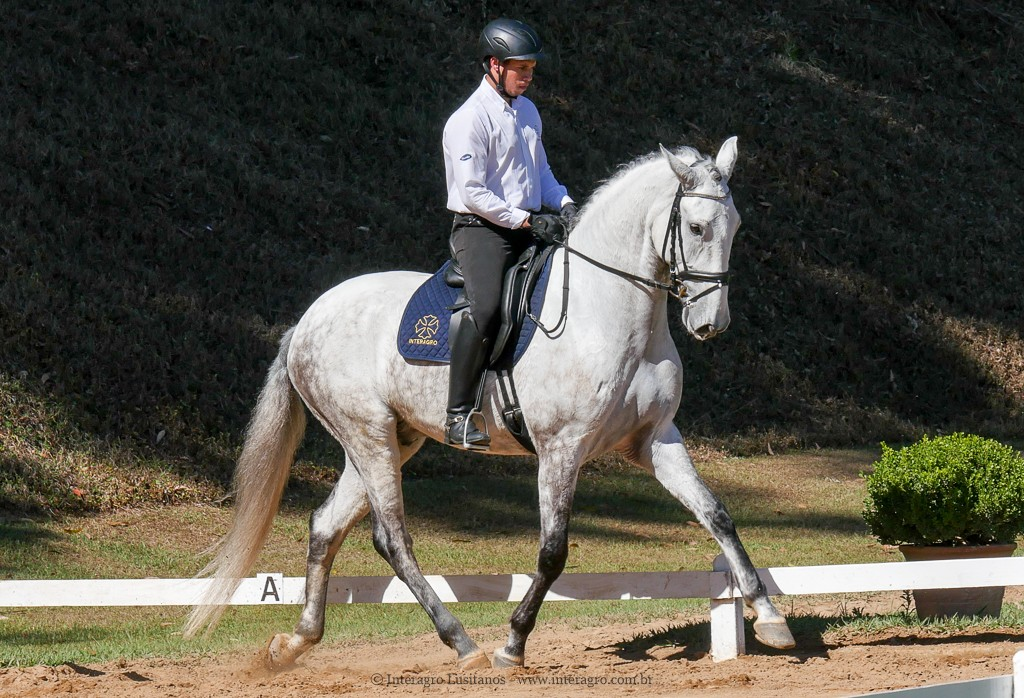 Leucon Interagro & Alexandre Souza, 1st place Young Horses 4 yo at the 2nd phase of 2019 Interagro Dressage Ranking/Interagro Lusitanos