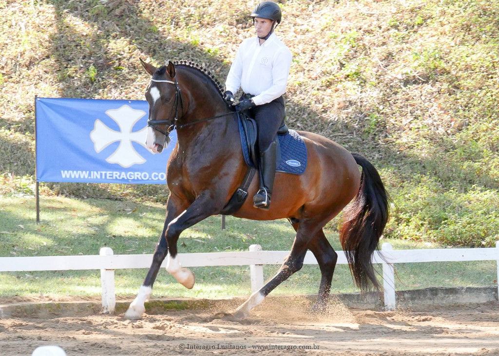 Luca Interagro & Alexandre Souza, 2nd place Young Horses 4 yo at the 2nd phase of 2019 Interagro Dressage Ranking/Interagro Lusitanos