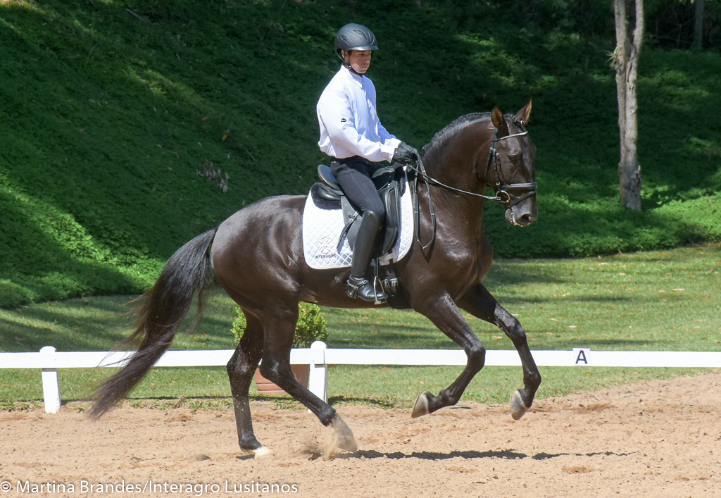 Lavagante Interagro, bay Lusitano stallion. Photo: Martina Brandes