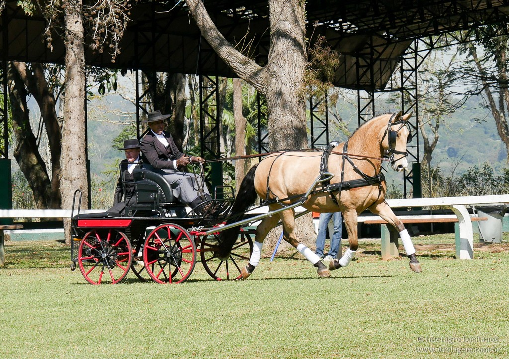 Antonio Souza and Carmelita Interagro, also competing for the 1st time, and placing 2nd at the Single Professional division at the 1st phase of 2019 CBH Driving Ranking