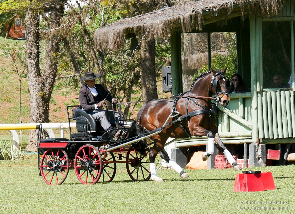 Antonio Souza and Iliria interagro at their show ever winning the Single Professional division
