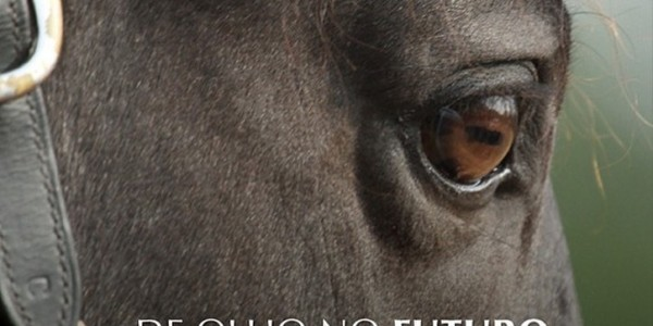 Esparteiro Interagro's Watchful Eye Graces Cover of Revista Horse