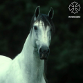 captura-de-tela-2016-10-21-as-11-10-00