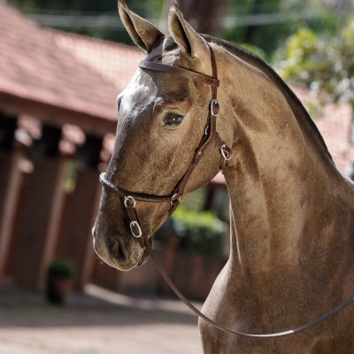Nepal Interagro - Lusitano foal for sale at 17th Interagro Yearlings Auction on September 2nd, 2017/TUPA