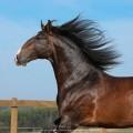 Luca Interagro, 17 hh bay Lusitano stallion. Photo: TUPA