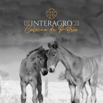 The 2021 Interagro Yearlings Collection